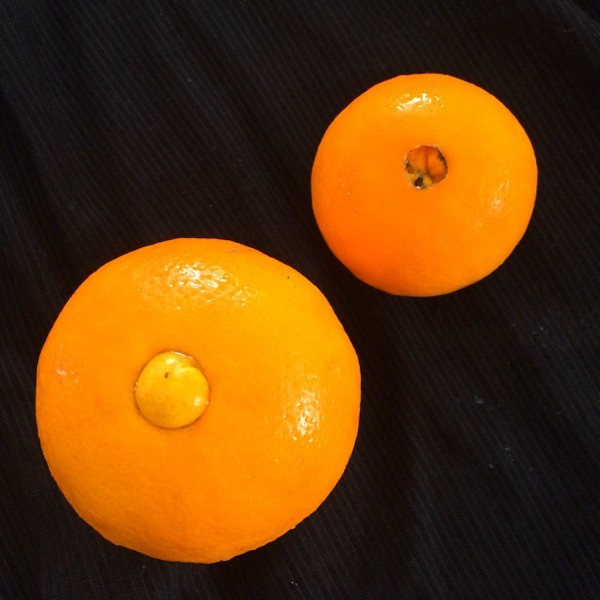 "Side note: Did you know that the ""navel"" on a navel orange could be an ""innie"" or an ""outie""?"