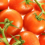 Group of Vine Tomatoes